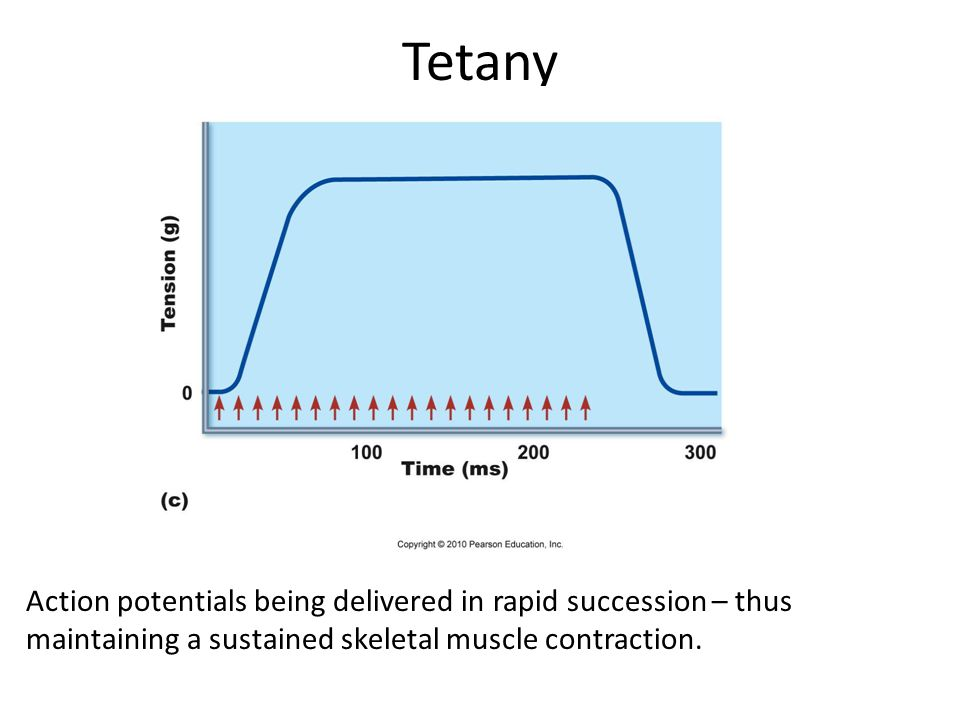 Tetany Action potentials being delivered in rapid succession – thus maintaining a sustained skeletal muscle contraction.