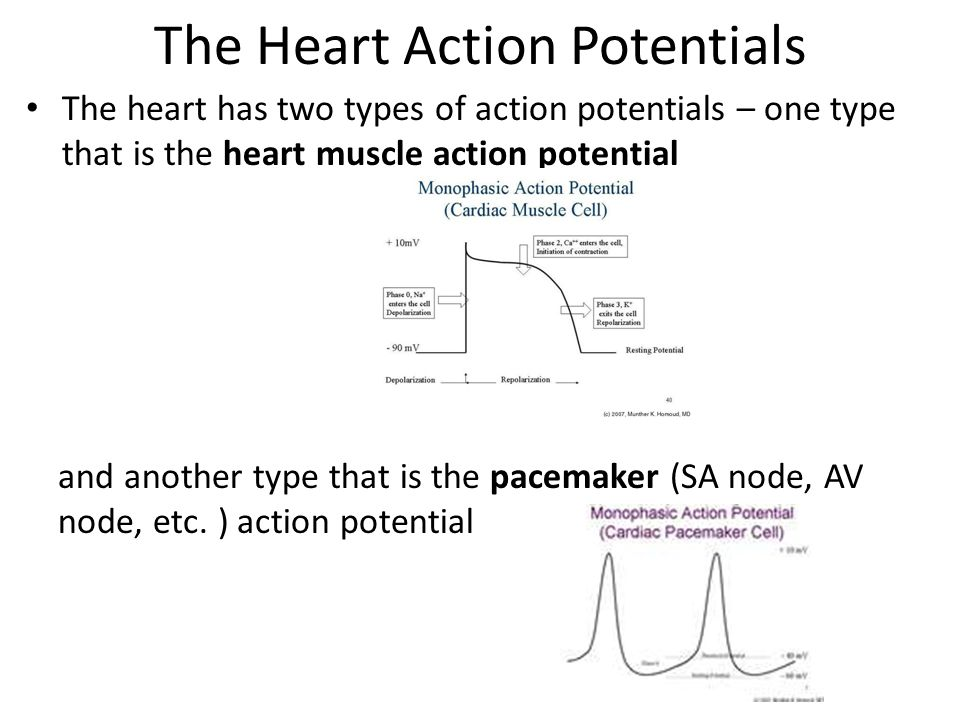 The Heart Action Potentials