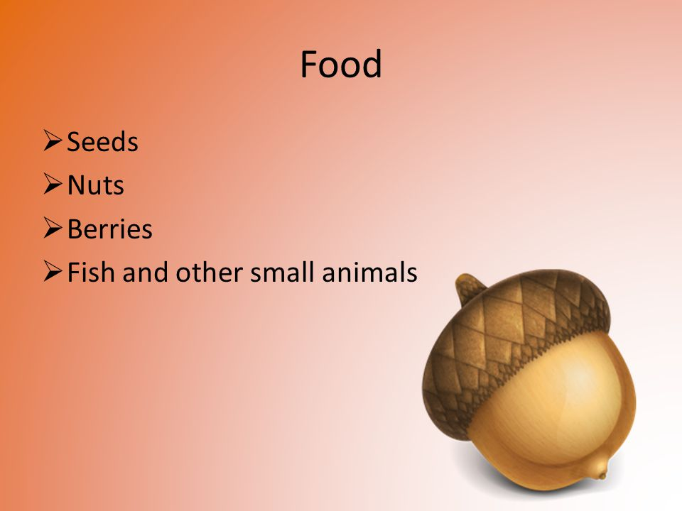 Food Seeds Nuts Berries Fish and other small animals