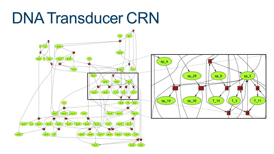 DNA Transducer CRN