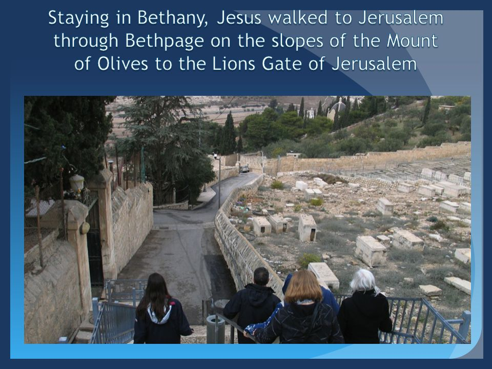 Staying in Bethany, Jesus walked to Jerusalem through Bethpage on the slopes of the Mount of Olives to the Lions Gate of Jerusalem