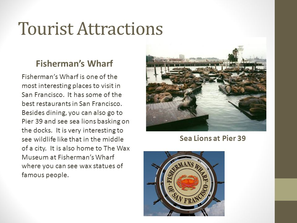 Tourist Attractions Fisherman's Wharf Sea Lions at Pier 39