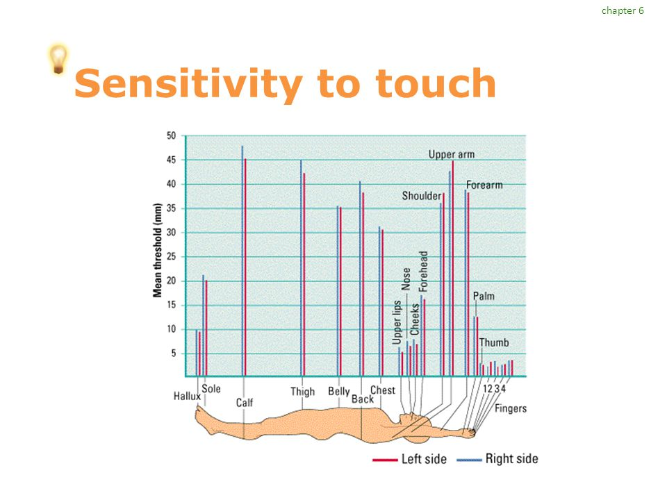 chapter 6 Sensitivity to touch