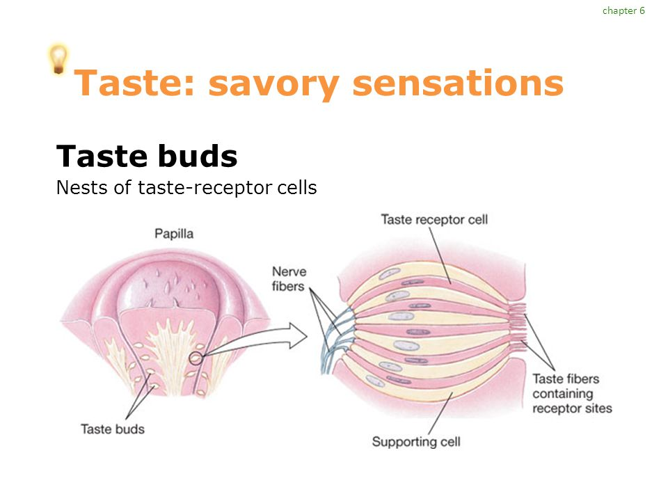 Taste: savory sensations