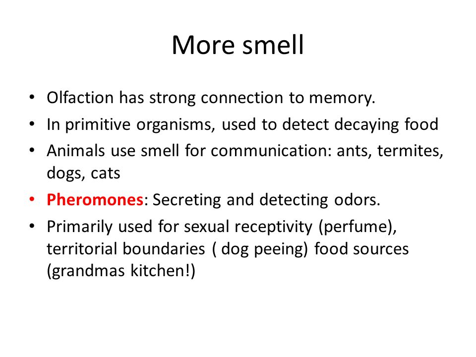 More smell Olfaction has strong connection to memory.