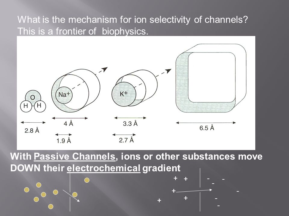 What is the mechanism for ion selectivity of channels