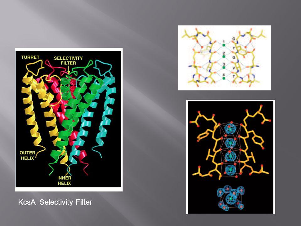 KcsA Selectivity Filter
