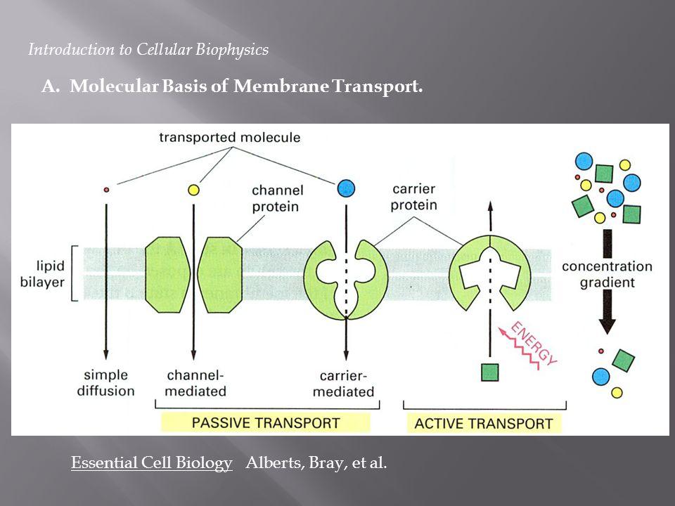 A. Molecular Basis of Membrane Transport.
