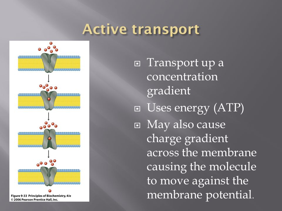 Active transport Transport up a concentration gradient