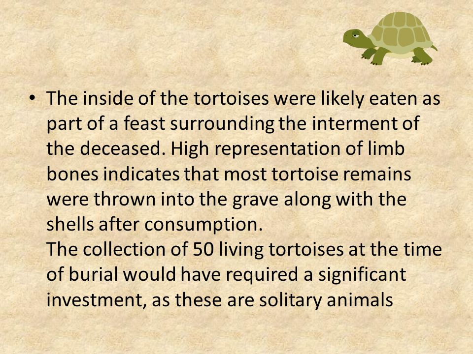 The inside of the tortoises were likely eaten as part of a feast surrounding the interment of the deceased.
