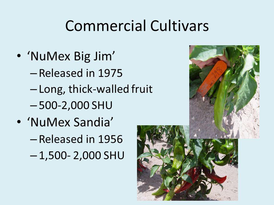 Commercial Cultivars 'NuMex Big Jim' 'NuMex Sandia' Released in 1975