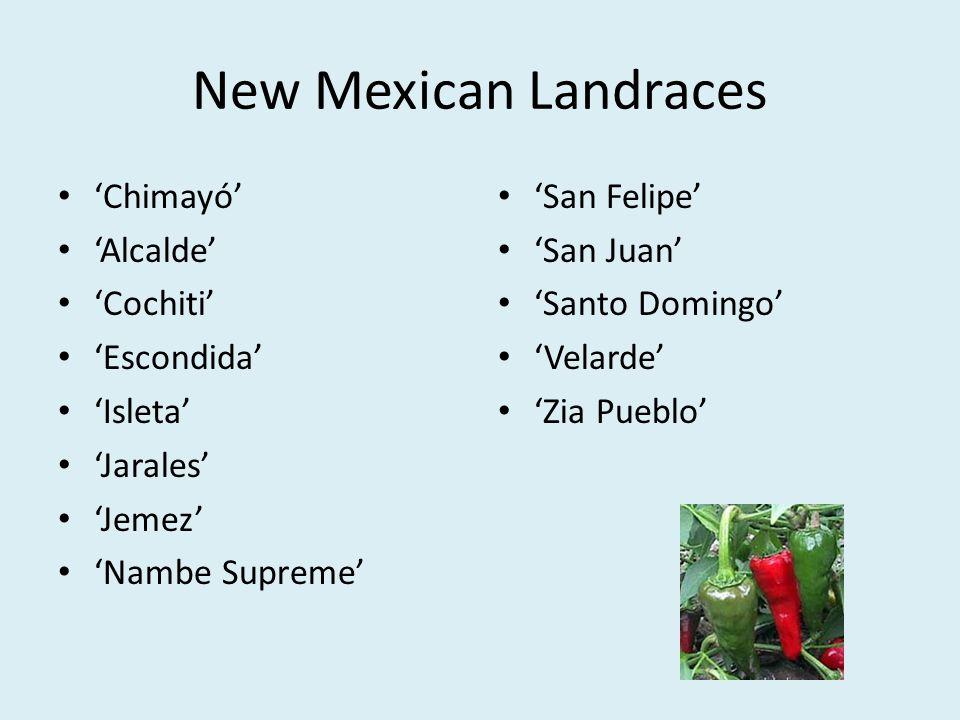 New Mexican Landraces 'Chimayó' 'Alcalde' 'Cochiti' 'Escondida'