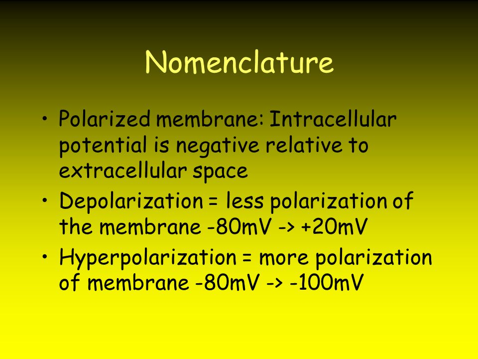 Nomenclature Polarized membrane: Intracellular potential is negative relative to extracellular space.