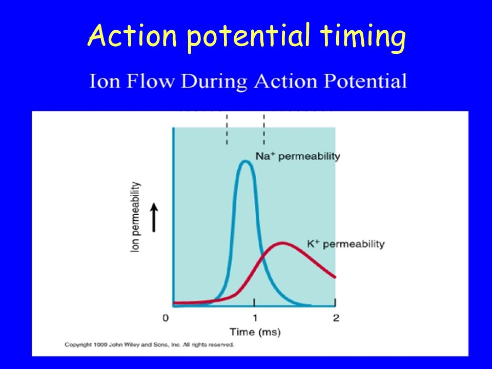 Action potential timing