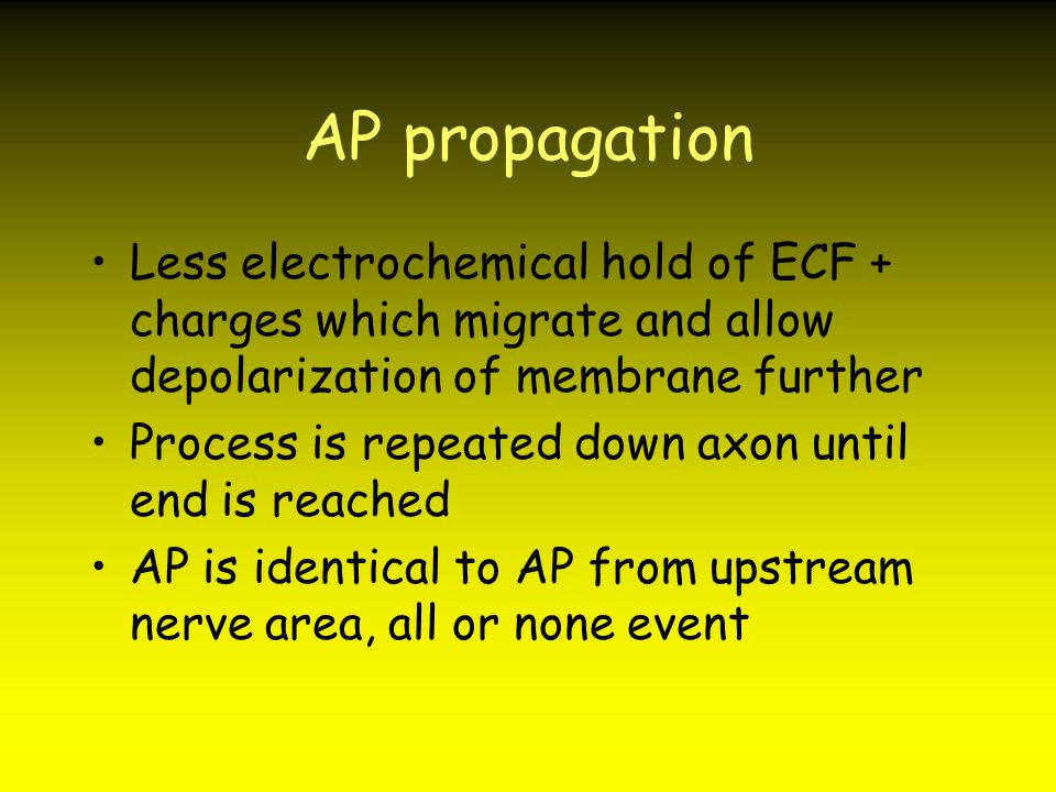 AP propagation Less electrochemical hold of ECF + charges which migrate and allow depolarization of membrane further.