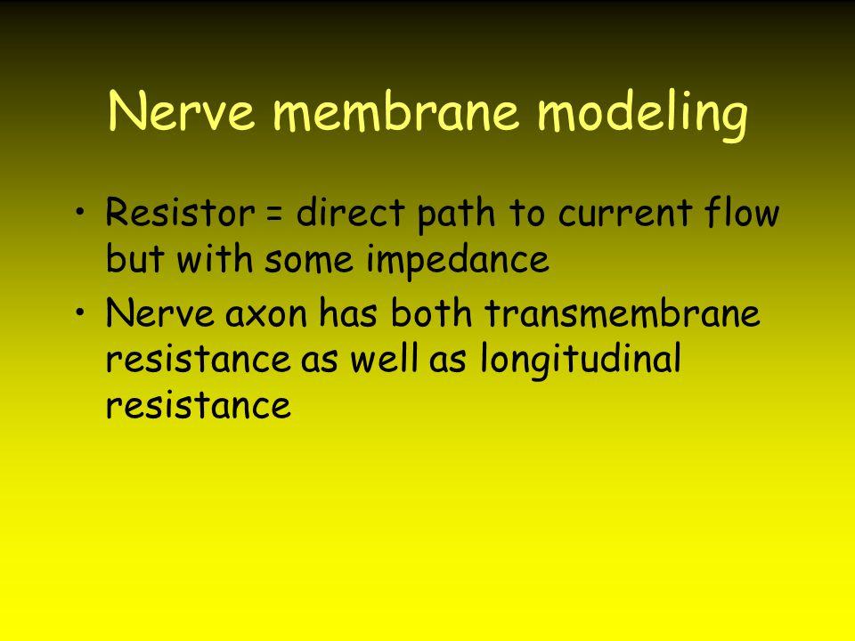 Nerve membrane modeling