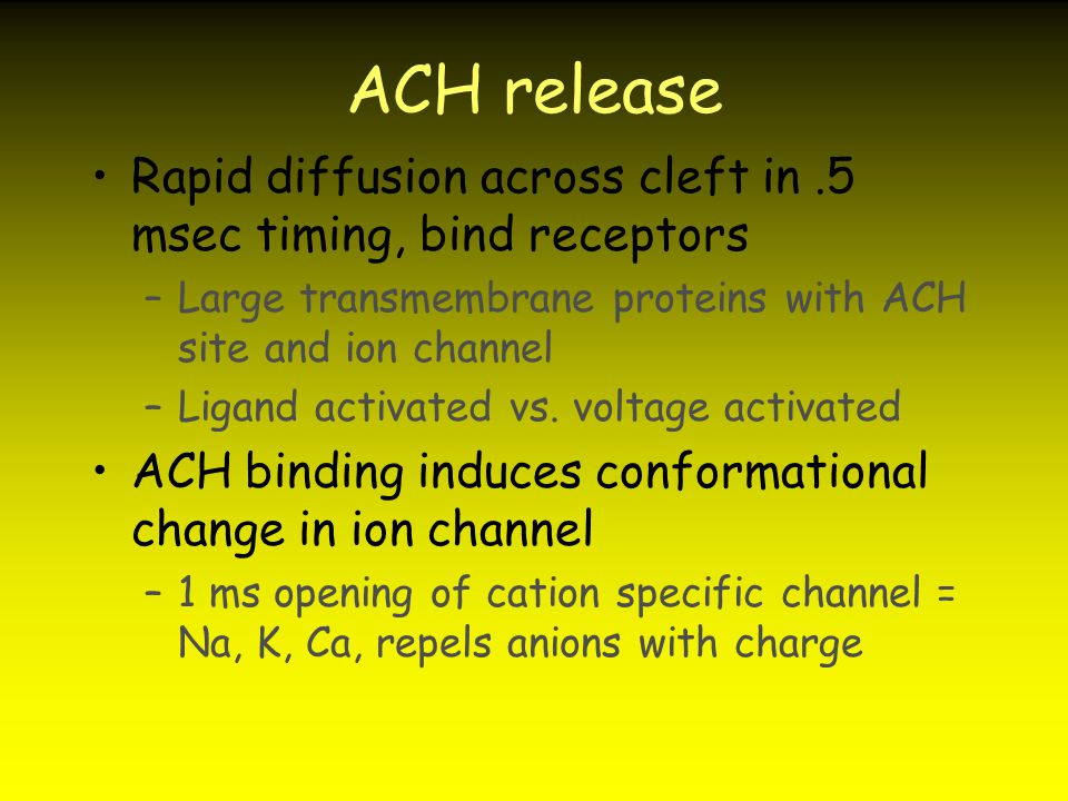 ACH release Rapid diffusion across cleft in .5 msec timing, bind receptors. Large transmembrane proteins with ACH site and ion channel.