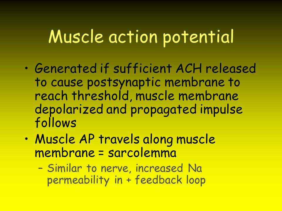 Muscle action potential