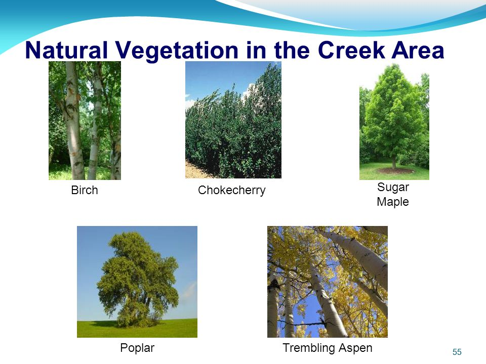 Natural Vegetation in the Creek Area