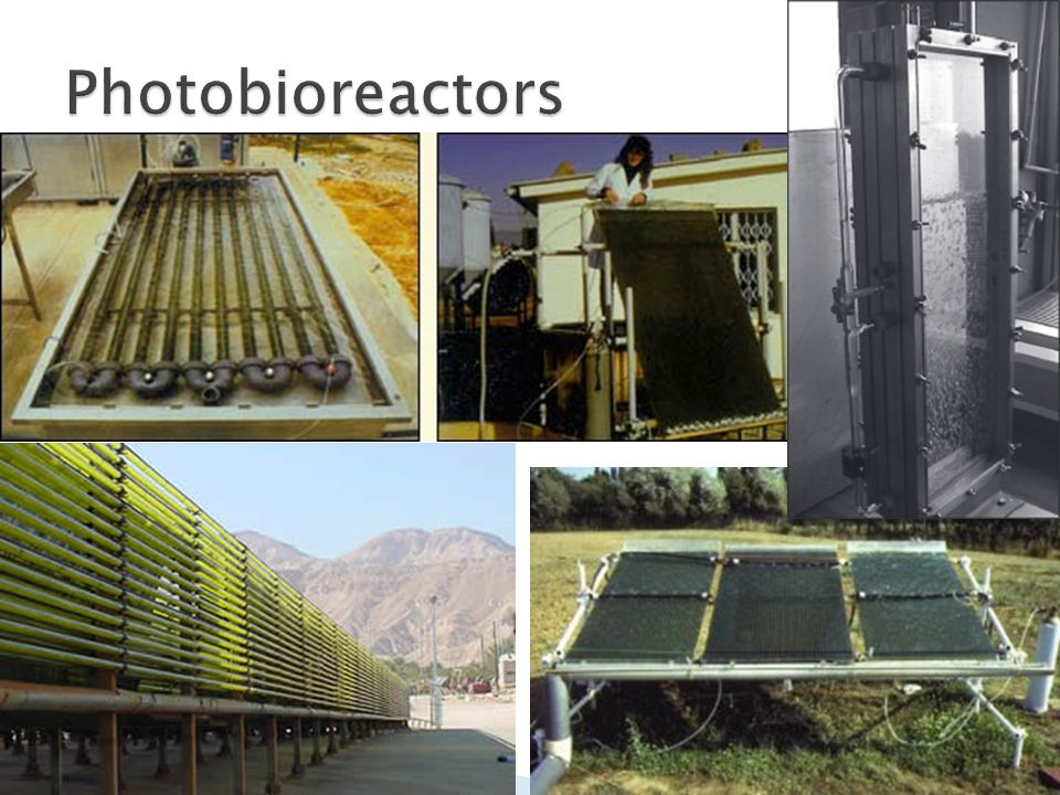 Photobioreactors