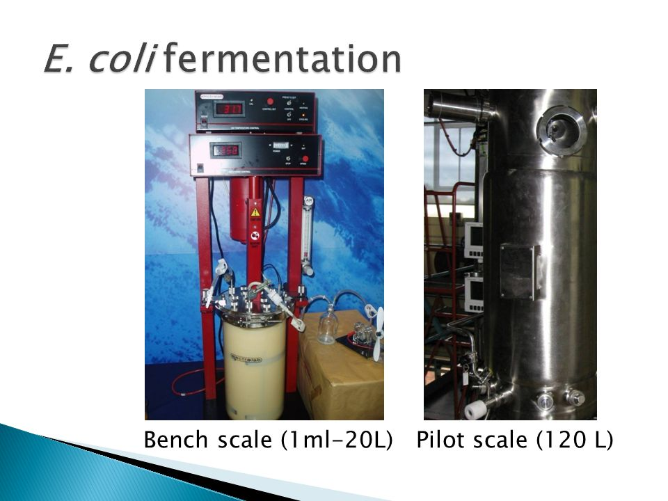 E. coli fermentation Bench scale (1ml-20L) Pilot scale (120 L)