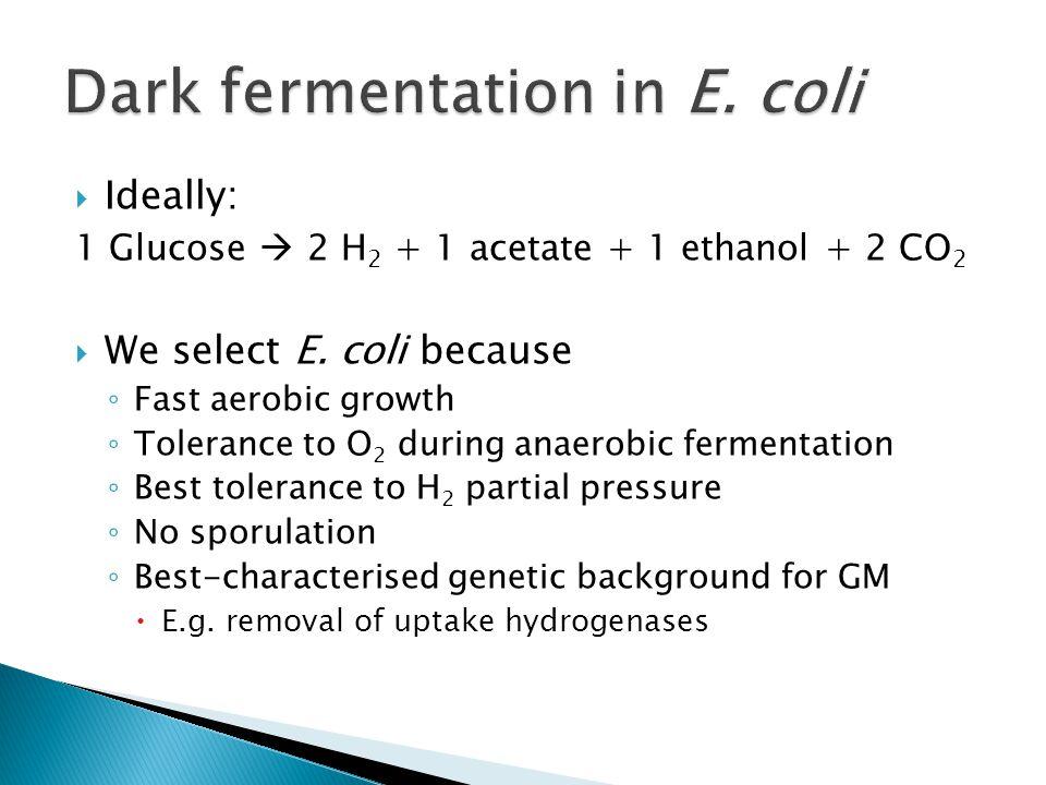 Dark fermentation in E. coli