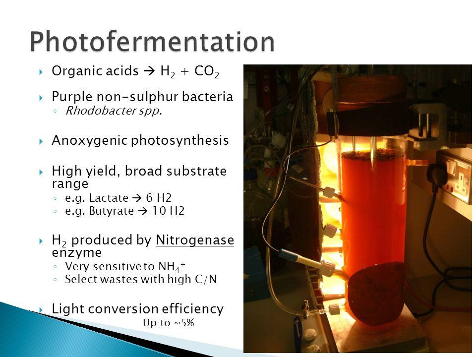 Photofermentation Organic acids  H2 + CO2 Purple non-sulphur bacteria