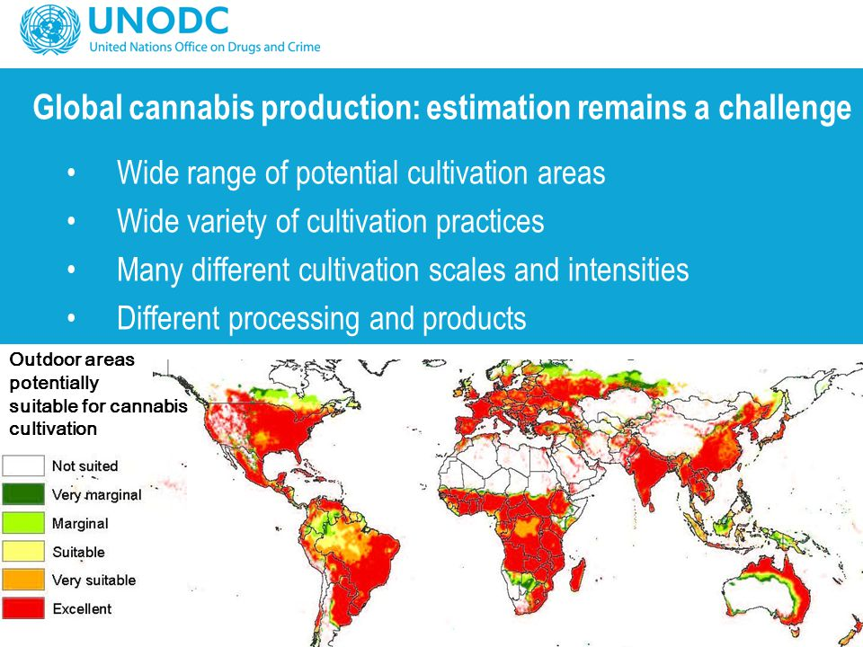 Global cannabis production: estimation remains a challenge