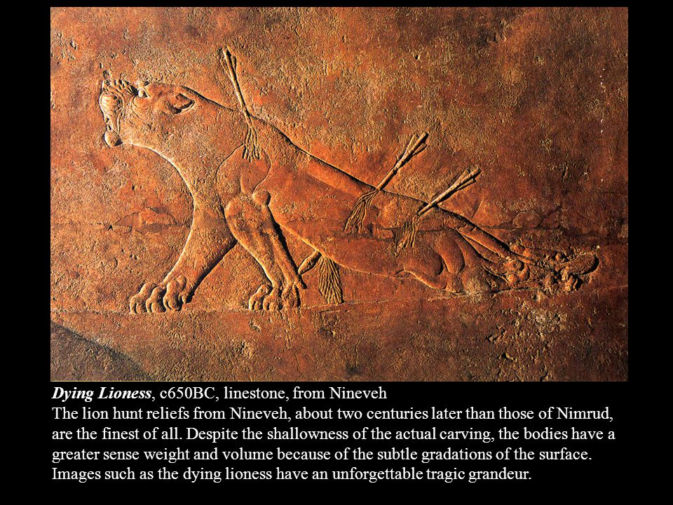 Dying Lioness, c650BC, linestone, from Nineveh