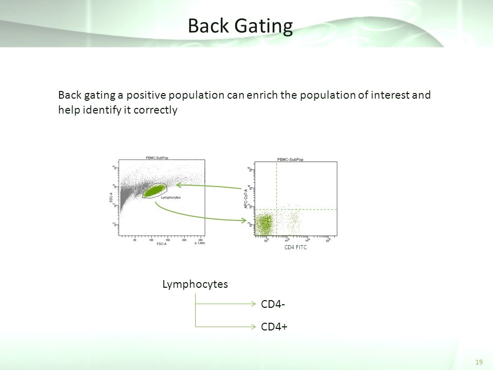 Back Gating Back gating a positive population can enrich the population of interest and help identify it correctly.