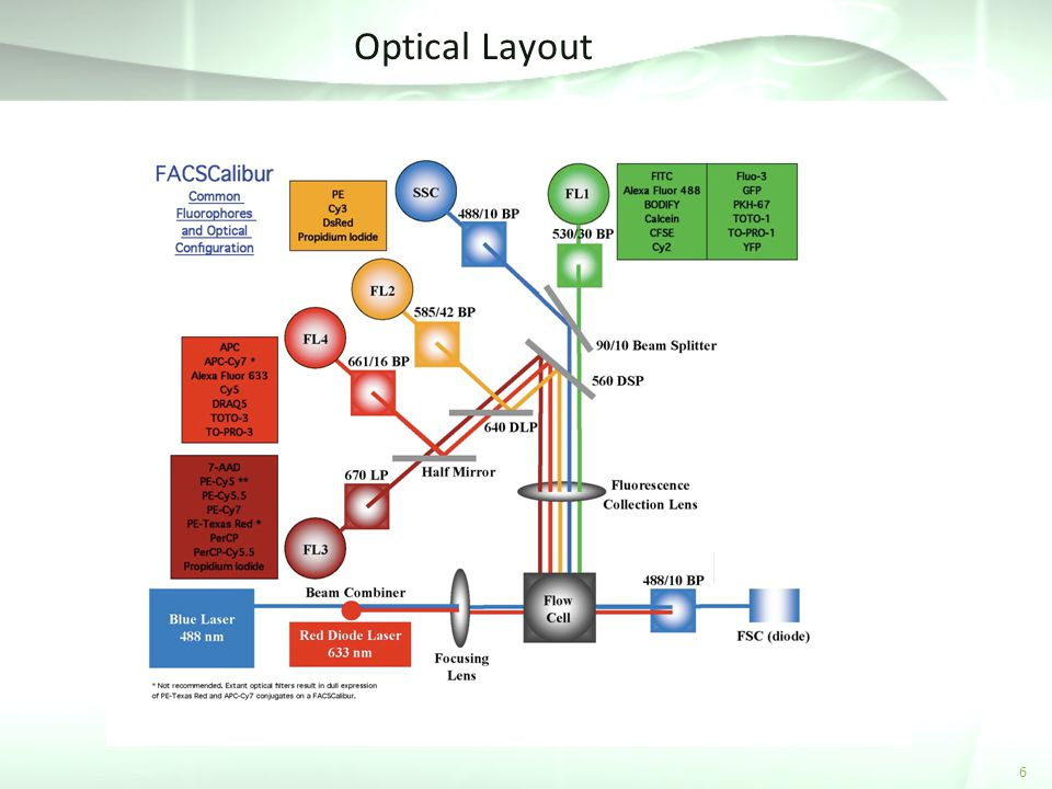 Optical Layout 6