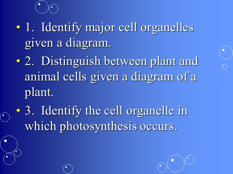 1. Identify major cell organelles given a diagram.