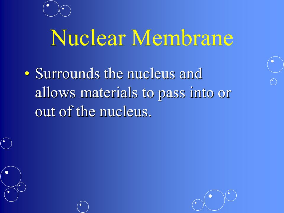 Nuclear Membrane Surrounds the nucleus and allows materials to pass into or out of the nucleus.