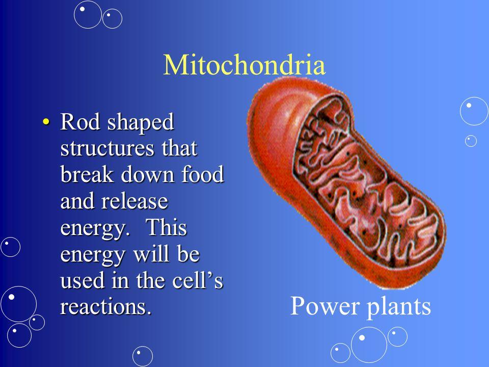 Mitochondria Power plants