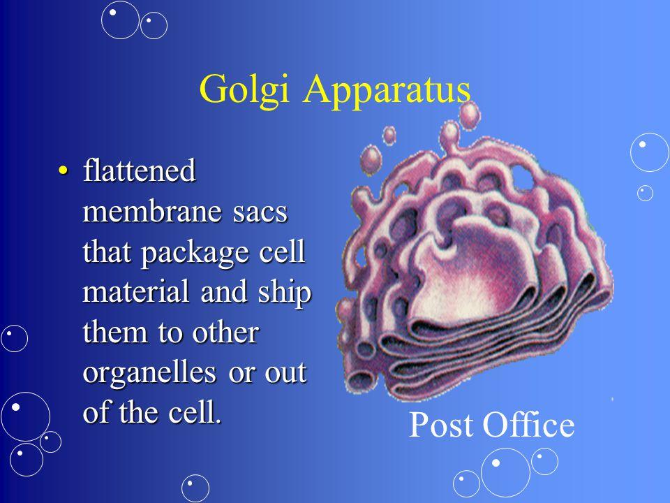 Golgi Apparatus Post Office
