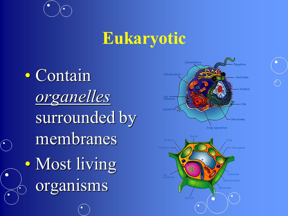 Eukaryotic Contain organelles surrounded by membranes Most living organisms