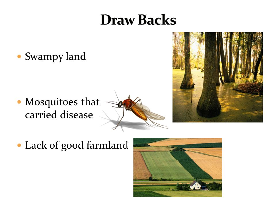 Draw Backs Swampy land Mosquitoes that carried disease