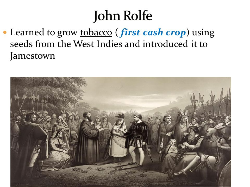 John Rolfe Learned to grow tobacco ( first cash crop) using seeds from the West Indies and introduced it to Jamestown.