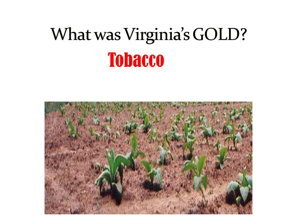 What was Virginia's GOLD