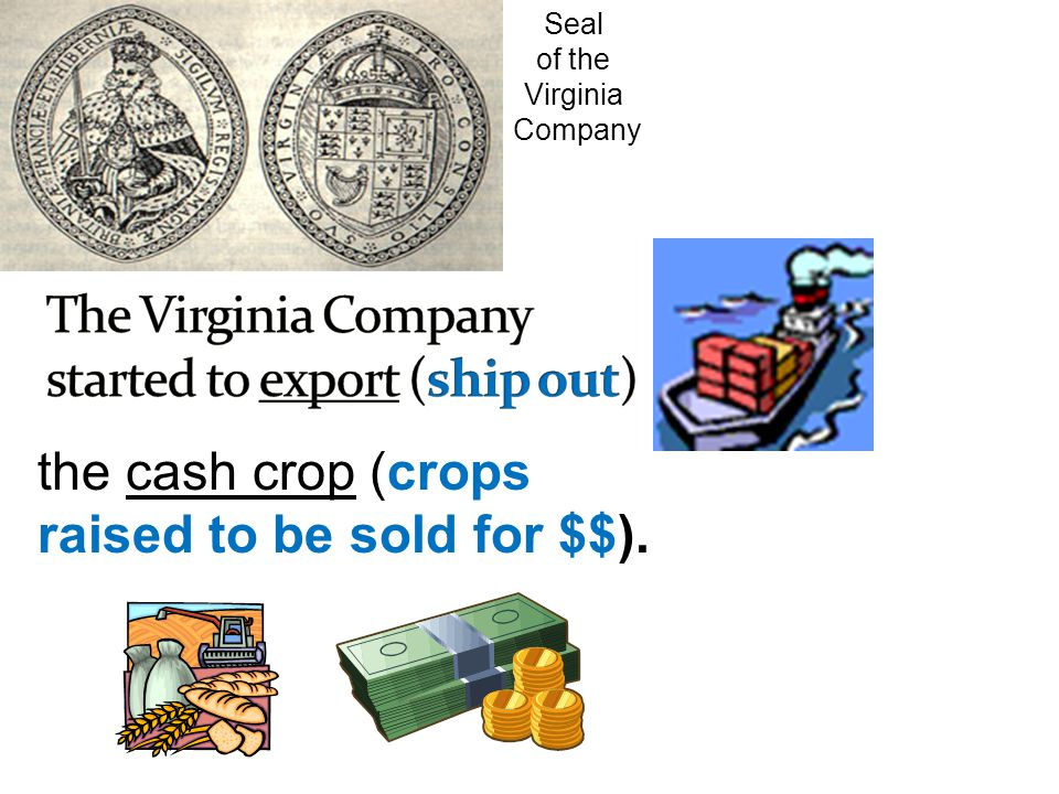 The Virginia Company started to export (ship out)