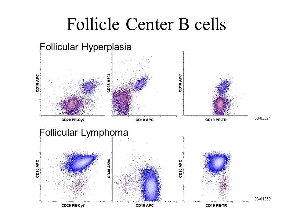 Follicle Center B cells