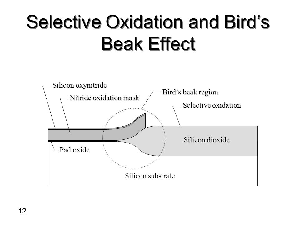 Selective Oxidation and Bird's Beak Effect