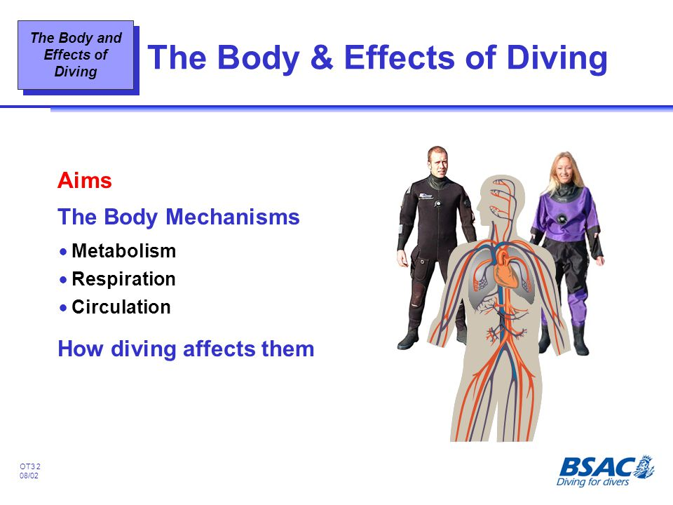 The Body & Effects of Diving