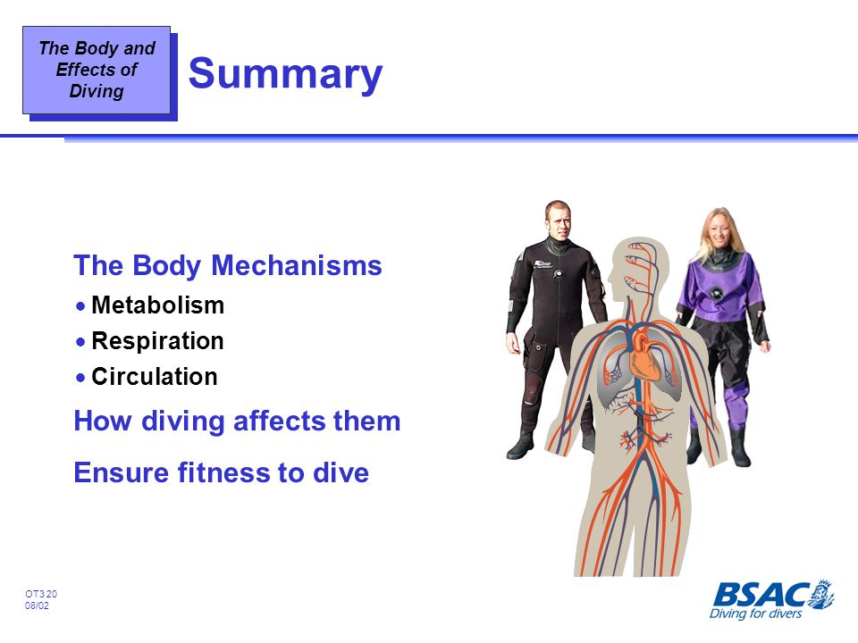 Summary The Body Mechanisms How diving affects them