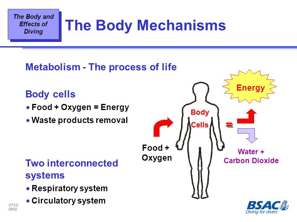 The Body Mechanisms = Metabolism - The process of life Body cells