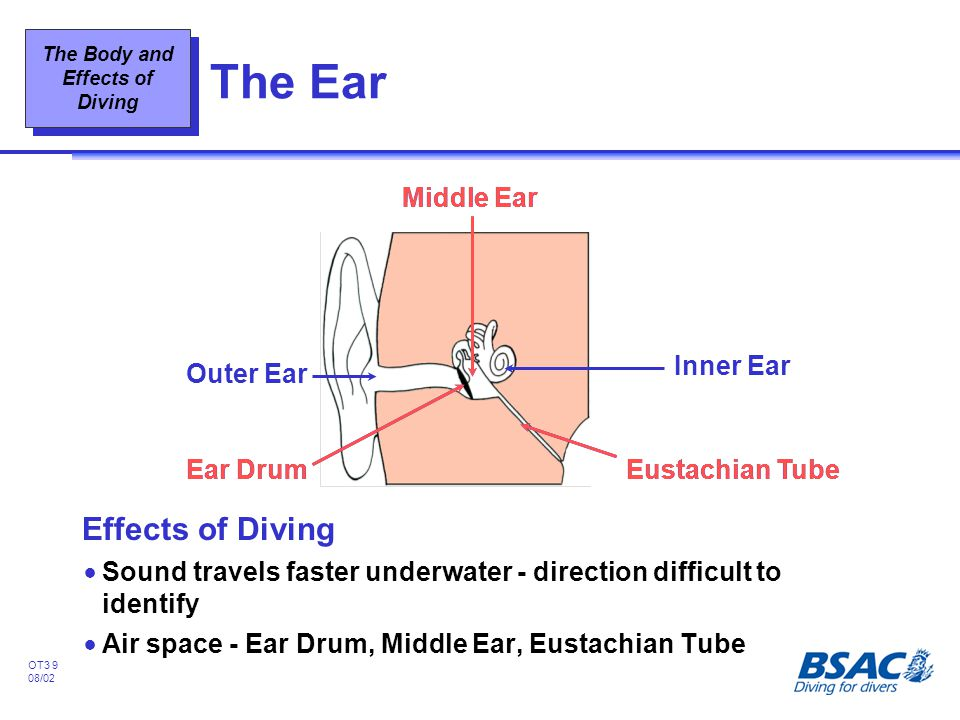 The Ear Effects of Diving Ear Drum Middle Ear Eustachian Tube