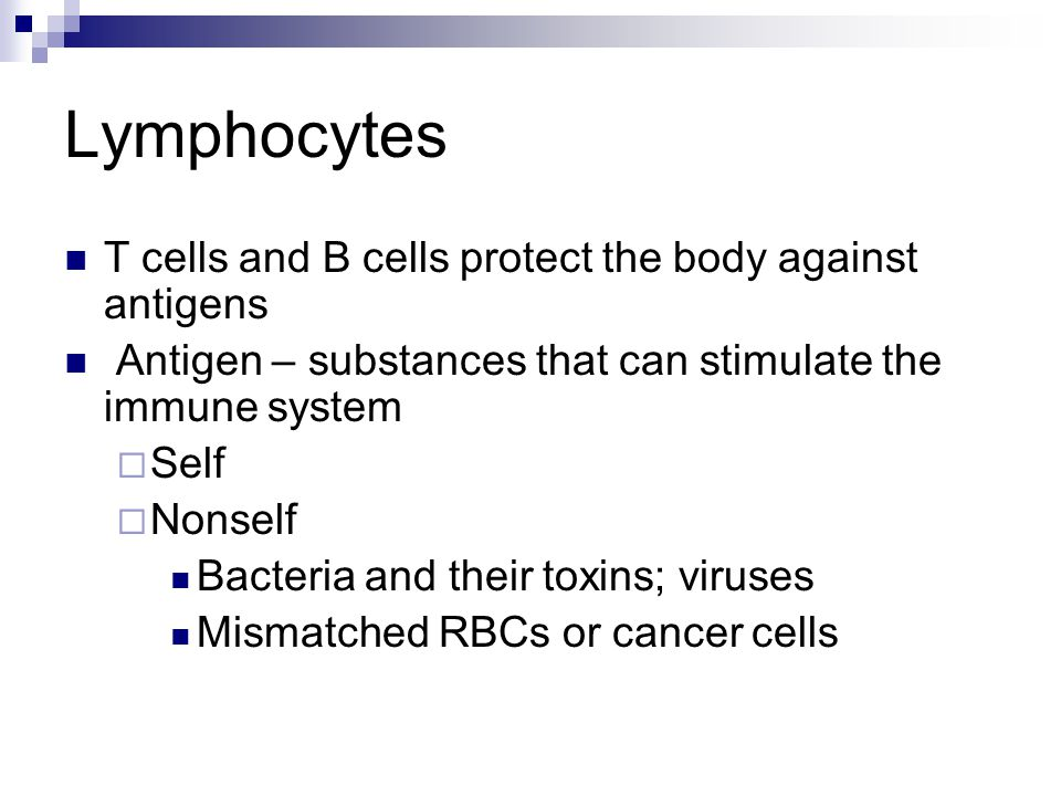 Lymphocytes T cells and B cells protect the body against antigens