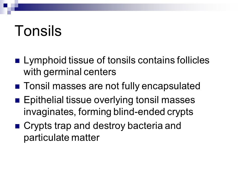 Tonsils Lymphoid tissue of tonsils contains follicles with germinal centers. Tonsil masses are not fully encapsulated.