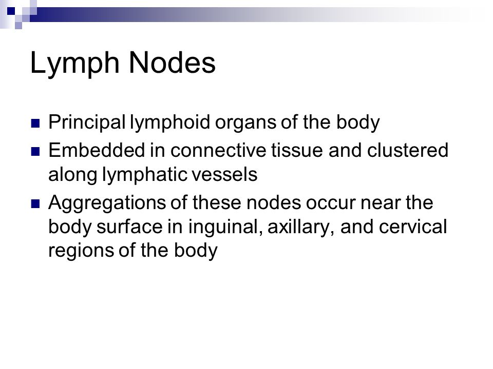 Lymph Nodes Principal lymphoid organs of the body