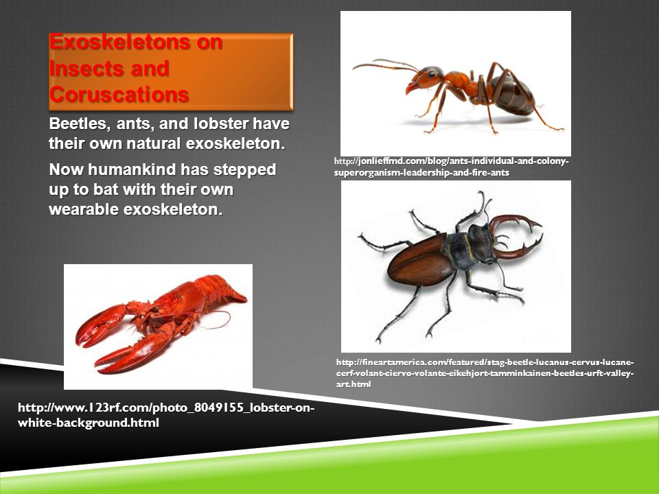 Exoskeletons on Insects and Coruscations